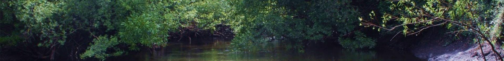 Polo de Ecología Fluvial